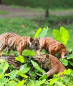 Wisata Virtual Jadi Sajian Hiburan dari Kebun Binatang Ragunan di Masa Pandemi