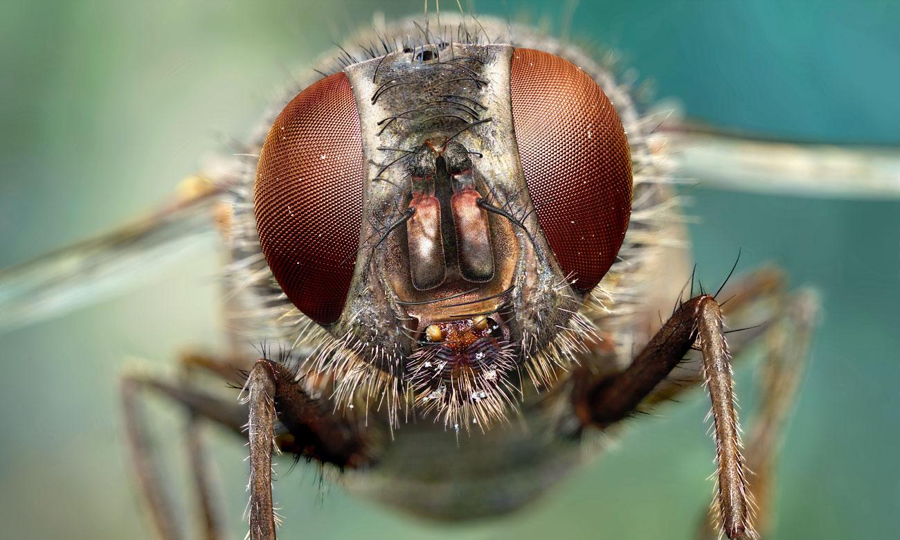 Kenapa Kita Takut dengan Serangga?