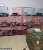 Ratusan Kucing Ini Dicuri, Buat Apa Yah?