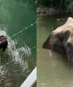 Gajah Mati Karena diberi Makan Petasan, Perintah Buru Pelaku