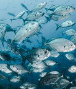 Perubahan Iklim Bikin Laut Makin Panas, Seluruh Ikan di Dunia Terancam Punah!