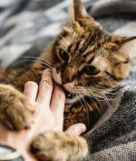 Dijilat Kucing Lalu Meninggal, Kok Bisa?