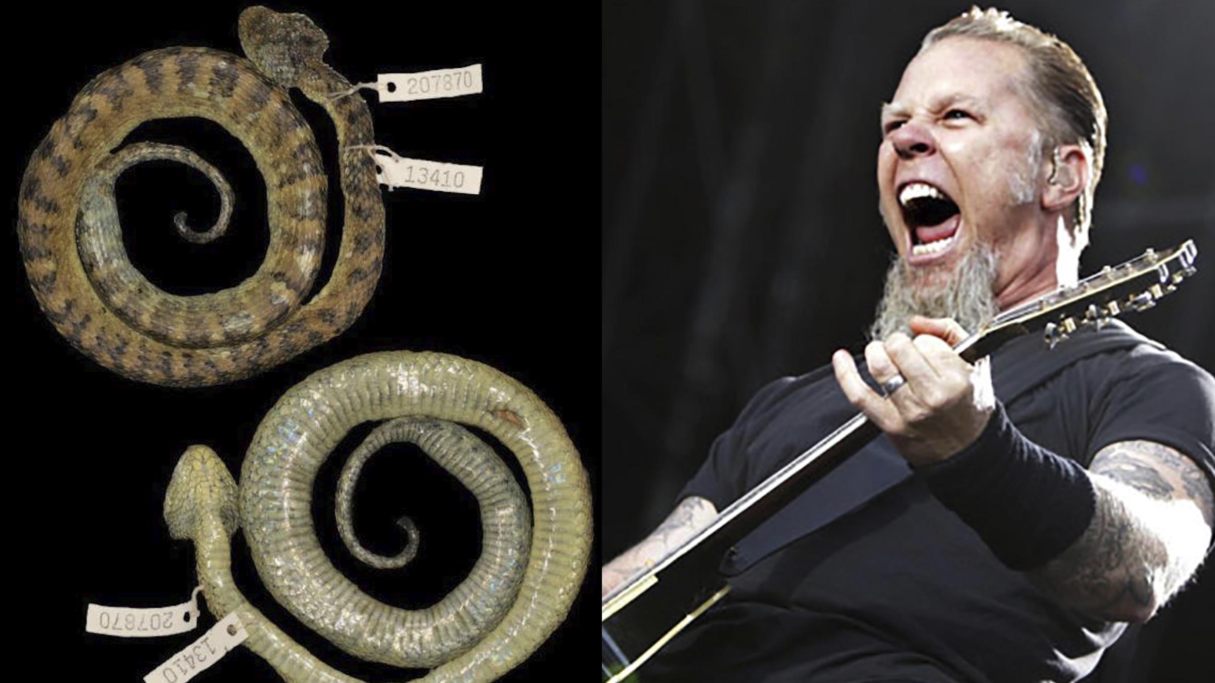 Vokalis Metallica Jadi Inspirasi Nama Spesies Ular Baru