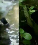 Video 'Kuntilanak Mandi' Viral di TikTok, Begini Penampakannya!
