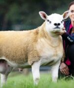 Domba Termahal di Dunia, Harganya Bisa Buat Beli Rumah di Jakarta!