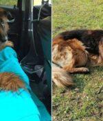 Dikubur Hidup-hidup Pemilik, Anjing Ini Berhasil Selamatkan Diri!