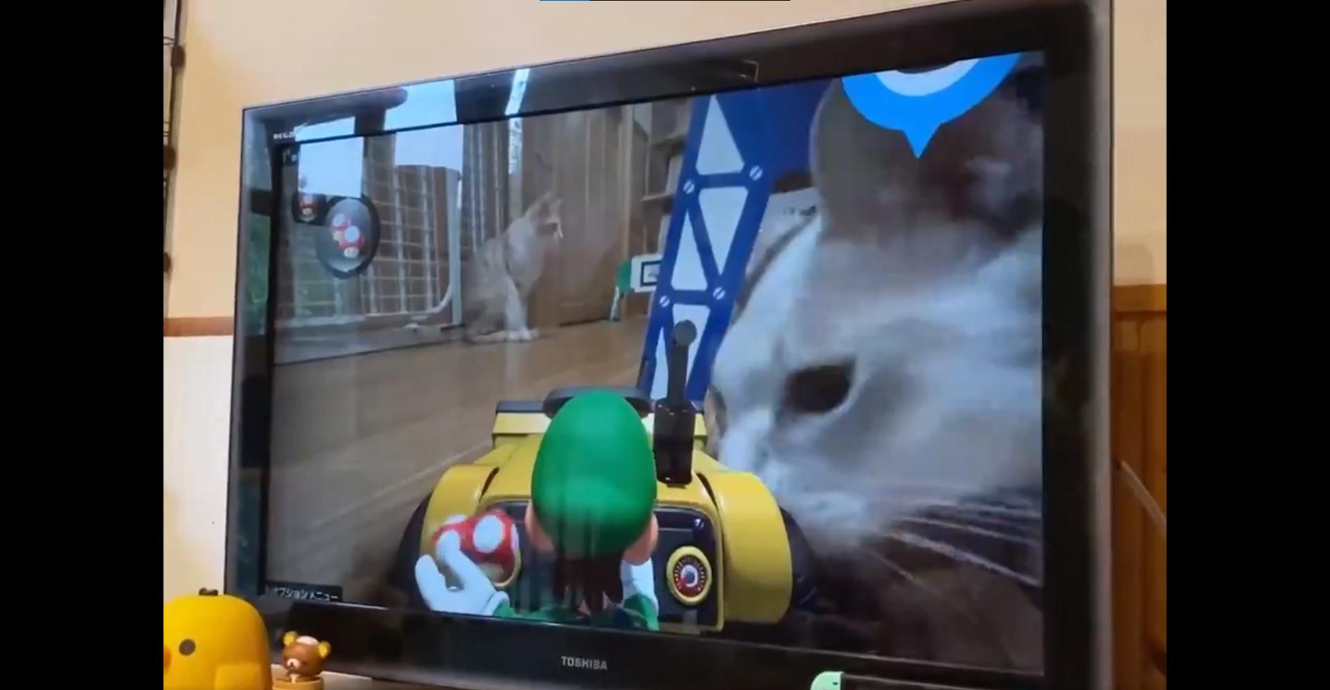 Mario Kart Live : Home Circuit, Saat Kucing dan Anjing Peliharaan Adalah 'BOSS' Utama!