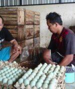 Telur Asin 'Brebes' Jadi Warisan Budaya Tak Benda, Apa Alasannya?