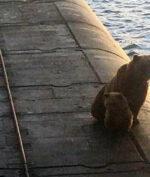 Sadis, Beruang dan Anaknya Ditembak Mati AL Rusia! Apa Sebabnya?