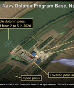 Lumba-Lumba Dilatih Korea Utara Untuk Berperang?