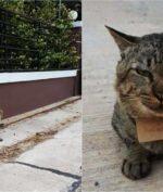Hilang 3 Hari, Kucing Ini Kembali ke Pemilik Membawa Tagihan Hutang!