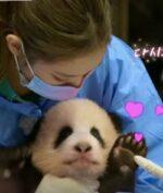 Blackpink Diinvestegasi Karena Seekor Panda, Kok Bisa?