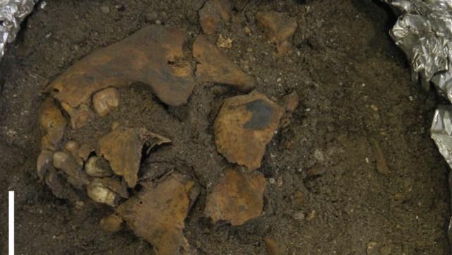 Makam Purba Berusia 8.000 Tahun Ditemukan di NTT, Ini Isinya! (Foto: Australian National University)