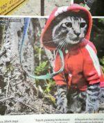 Kucing Hobi Naik Gunung dan Flying Fox, Gimana Ceritanya?