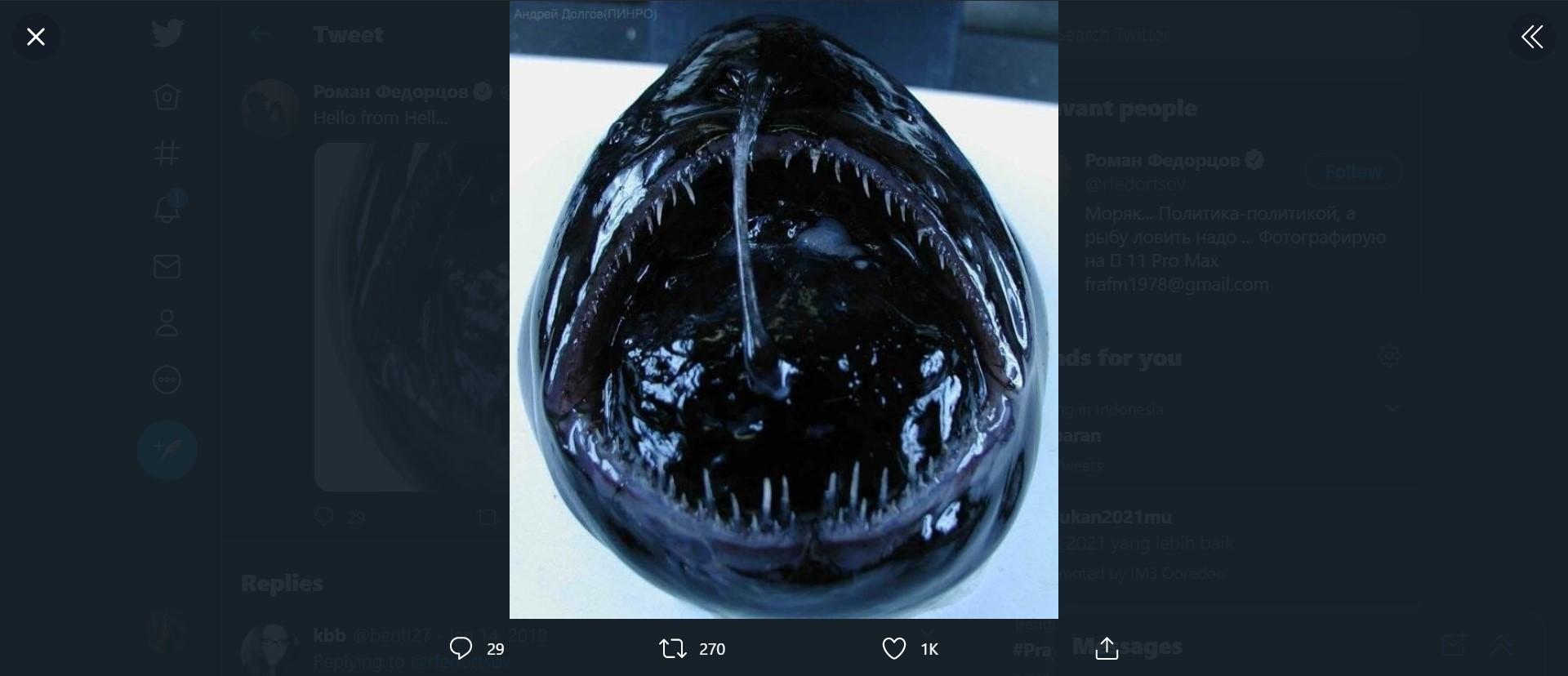 Ikan Aneh Mirip Alien Ditemukan Nelayan Pada Jaringnya, Ngeri! Seperti Apa Bentuknya?
