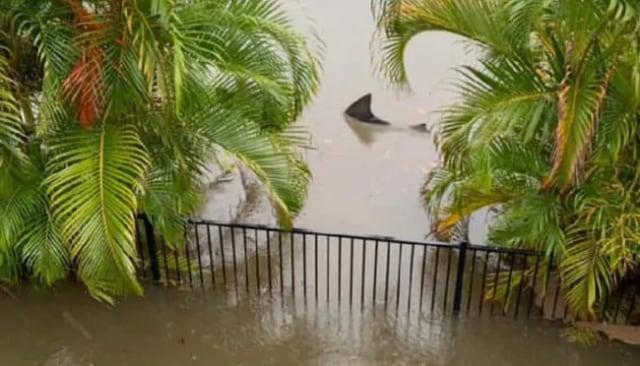 Hiu Muncul di Halaman Rumah Saat Banjir, Kok Bisa?
