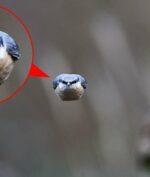 """""""Angry Bird Asli"""""""
