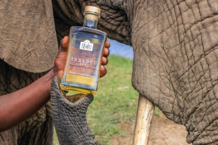 Minuman Alkohol Ini Dibuat dari Saringan Kotoran Gajah