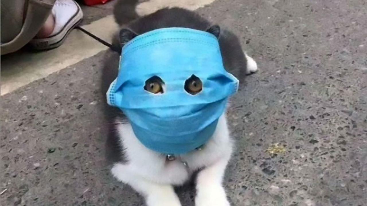 Kasus Corona Pada Hewan, Anjing dan Kucing Juga Bisa Tertular Covid