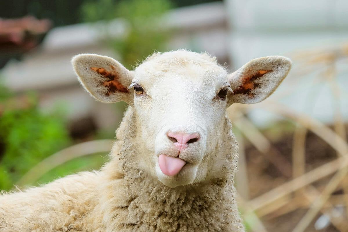 Peluk Domba Sampai Menelepon Orang, Ini Cara Atasi Kesepian!