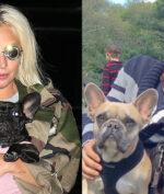 Gaga, Fischer, the Dogs