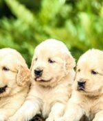 Pasang Foto Anjing Bikin Lebih Cepat Match di Tinder, Jomblo Wajib Tau!