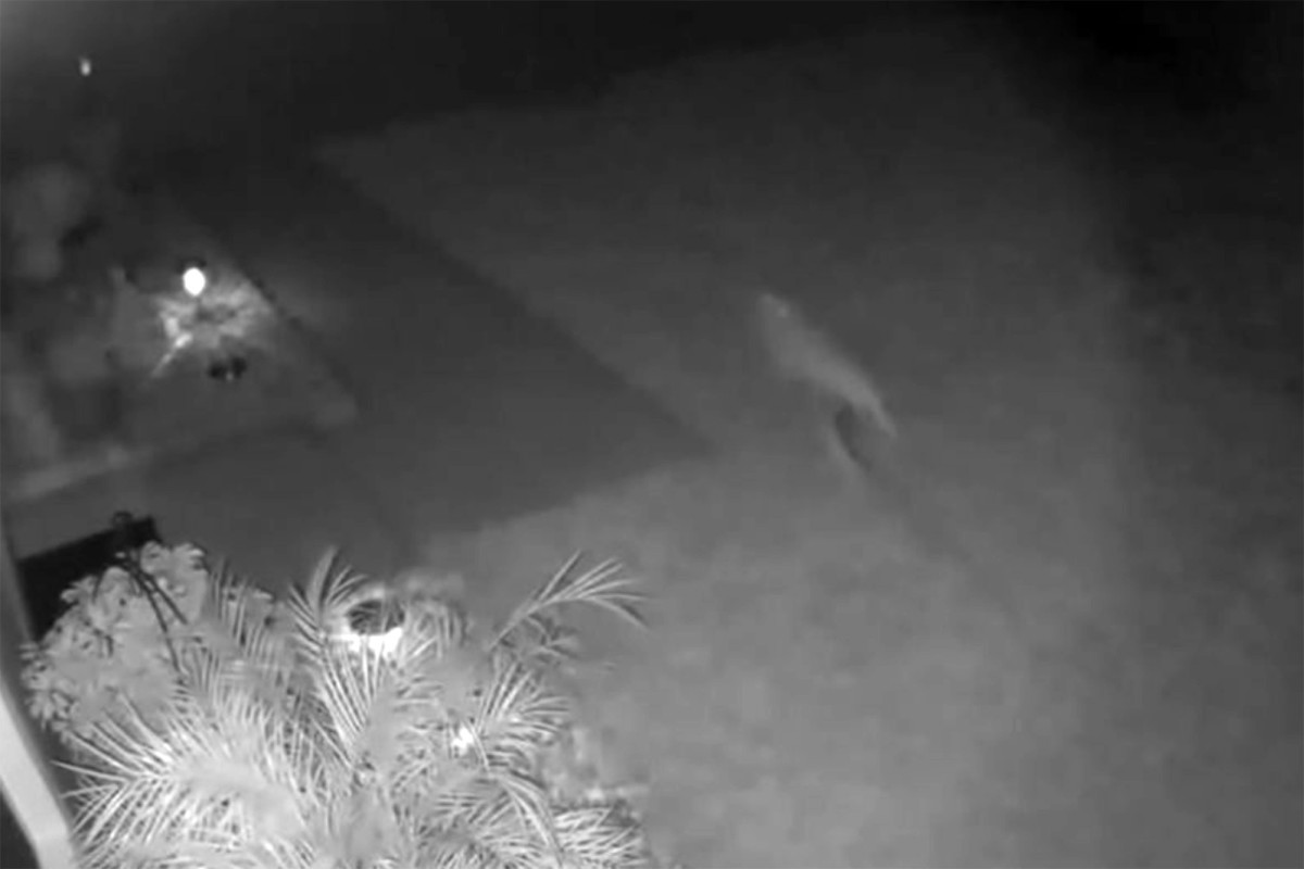 Makhluk Aneh Diduga Dinosaurus Terekam di Kamera CCTV, Videonya Viral