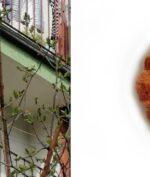 Binatang Asing Bikin Warga Ini Takut Buka Jendela, Seminggu Kemudian Ia Mengetahui Kalau Itu Kue Croissant!