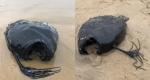 Makhluk Aneh Ditemukan di California, Wujudnya Bikin Ngeri!