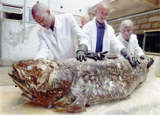 Ikan Purba 420 Juta Tahun Lalu Ditemukan di Madagaskar, Begini Bentuknya