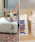 Kenapa Kucing Suka Masuk Atau Berada di Atas Kotak?