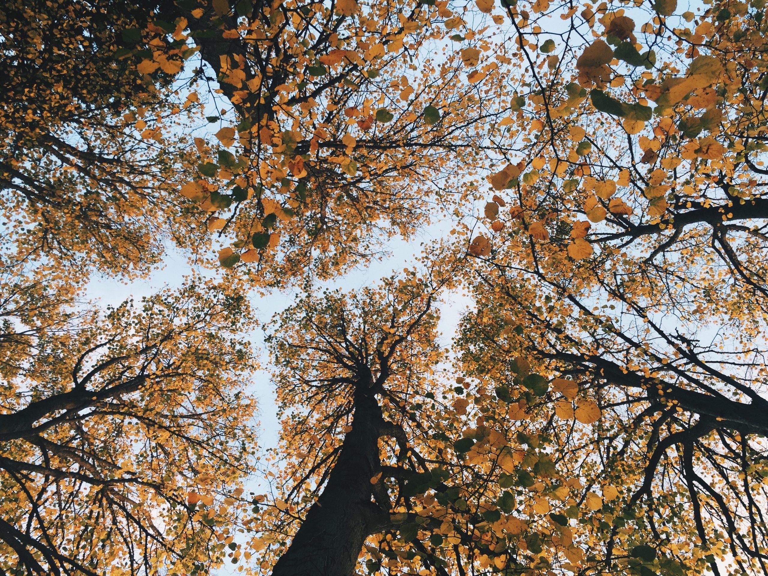 Pasien Covid-19 Isolasi Diri di Atas Pohon Selama 11 Hari, Ini Alasannya