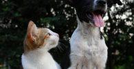 Ratusan Kotak Misteri Berisi Anak Anjing Mati Ditemukan di China