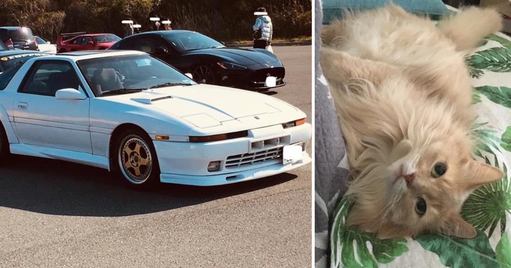 Demi Biaya Berobat Kucing, Pria Asal Jepang Ini Jual Mobil Kesayangannya!