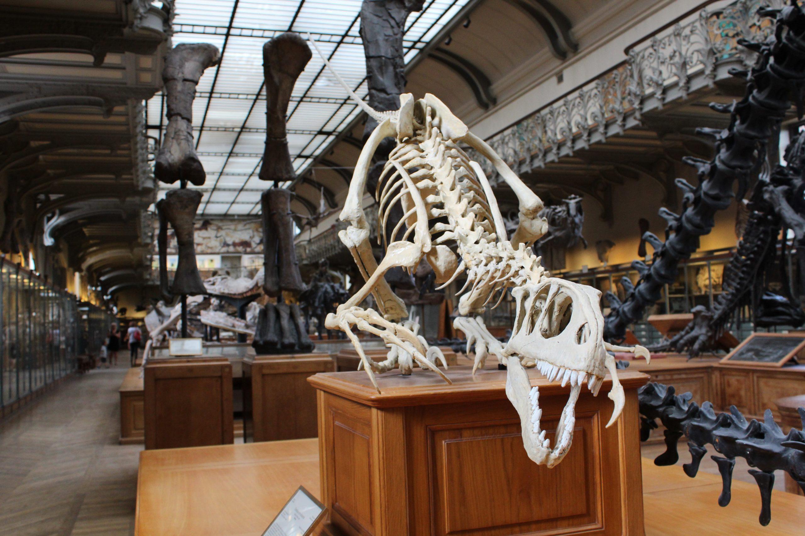 Spesies Baru Dinosaurus Ditemukan, Salah Satu yang Terbesar