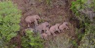 Sekelompok Gajah Ditemukan Terkapar Setelah Berjalan 500 Km, Ilmuwan Tak Mengetahui Apa Alasannya