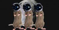 Tikus Luar Angkasa Lahir dari Sperma yang Disimpan di Antariksa!