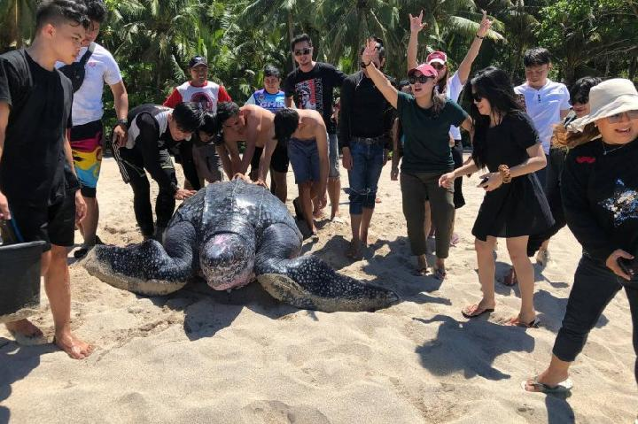 Penyu Terbesar di Dunia Ditemukan Terdampar di Sulawesi Utara