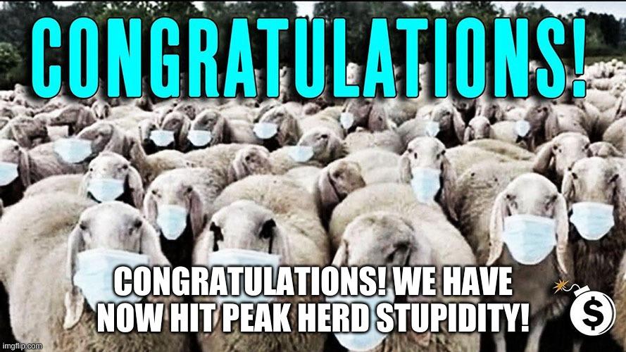 Herd Stupidity SudahTercapai di Indonesia, Kalau Immunity Belum