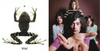 Spesies Baru Kodok Dinamai Led Zeppelin