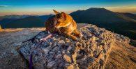 Kucing yang Mendaki Pegunungan Tertinggi, Ini Dia si Floki!