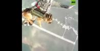 Pelatihan Anjing Khusus Terjun Payung Dilakukan Militer Rusia!