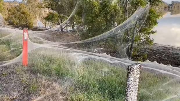 Fenomena Aneh Jaring Laba-Laba Selimuti Australia, Ini Penjelasannya!