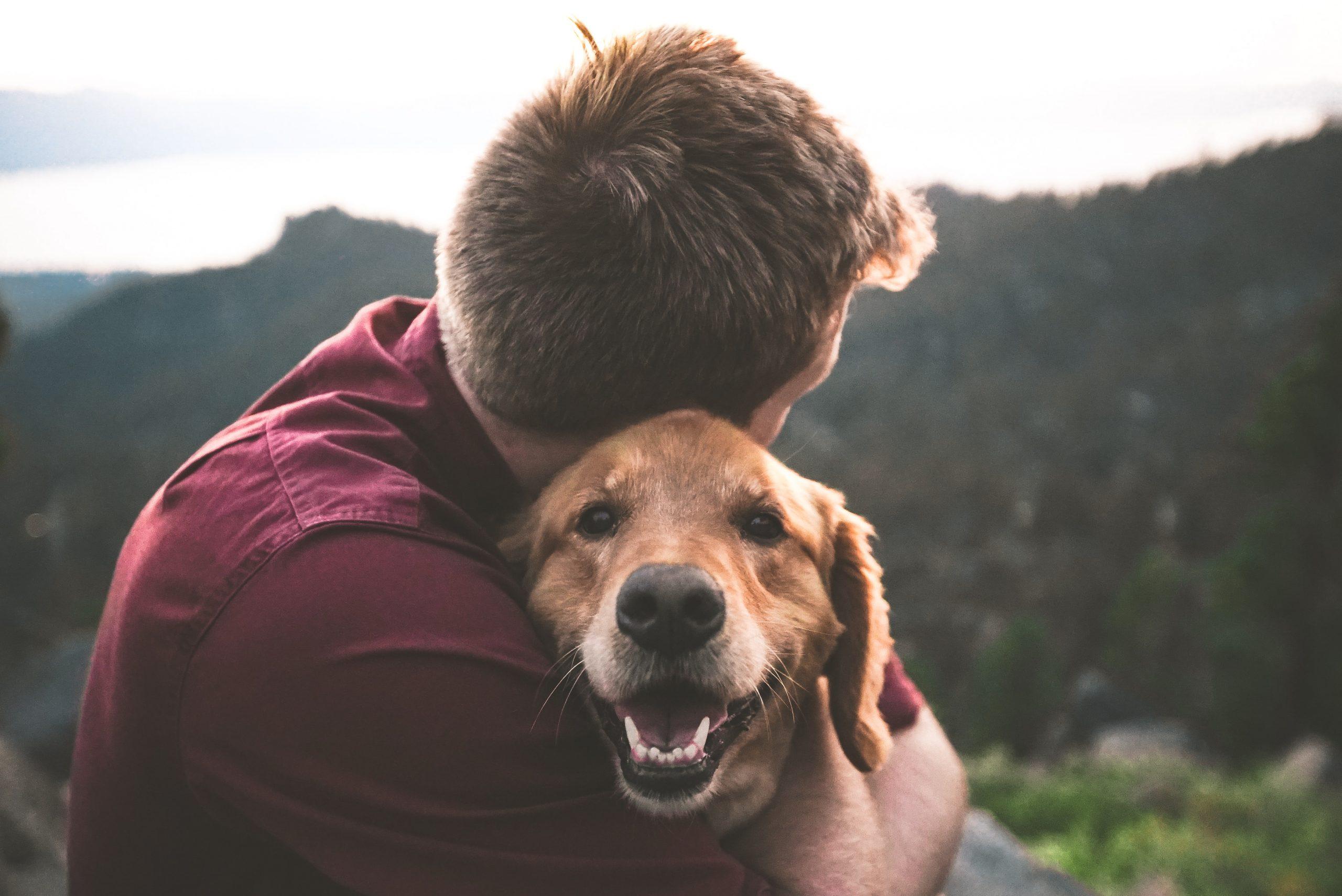 Memelihara Anjing, Pemilik Bisa Berumur Lebih Panjang??