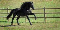Punya Akun Facebook, Ini Dia Kuda Tertampan di Dunia!