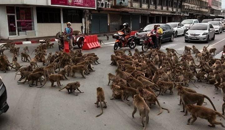 Tawuran Antar Geng Monyet di Jalanan Bikin Heboh