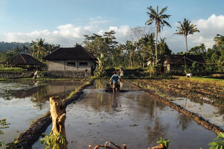 Jokowi Ingin Generasi Muda Minat Menjadi Petani Profesional