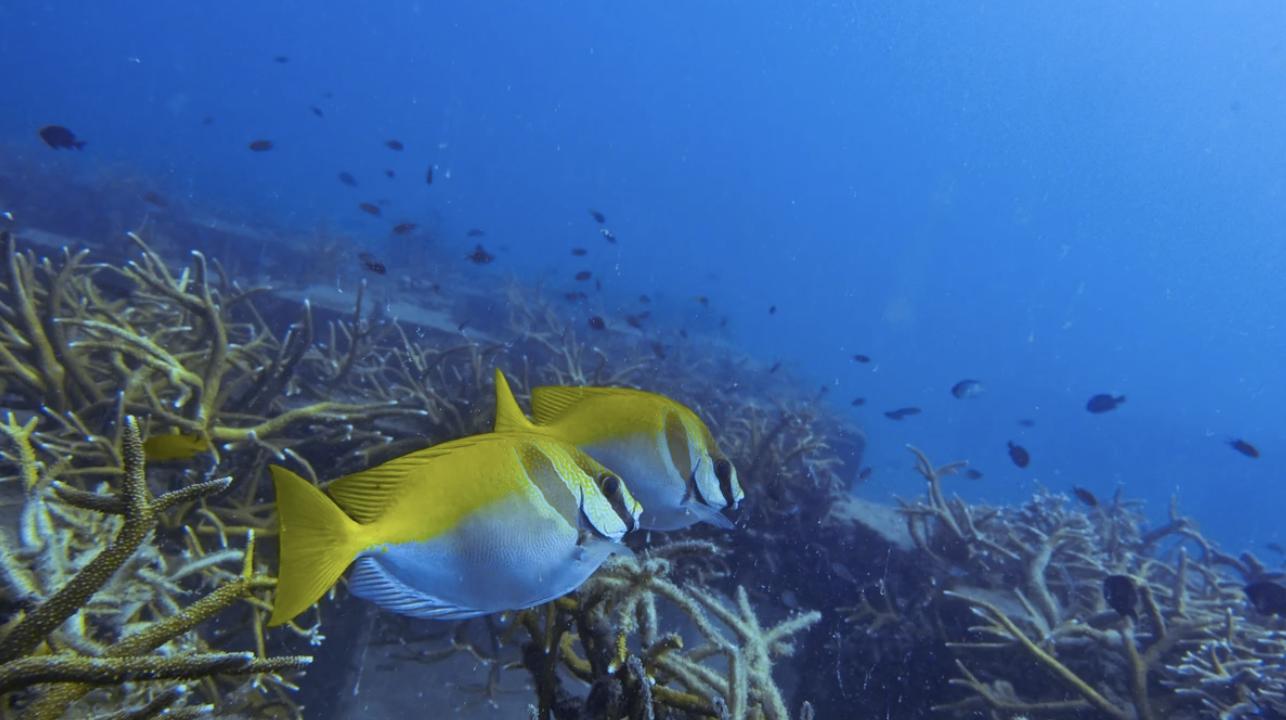 Wisata ke Thailand, Jangan Pakai Sunscreen perusak terumbu karang