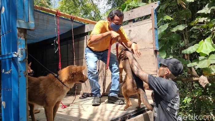 Kasus Penyelundupan Anjing Untuk Konsumsi Akan Disidangkan