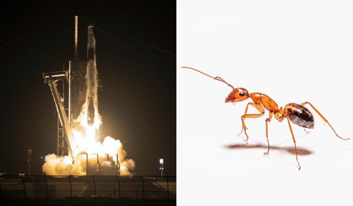 Elon Musk Terbangkan Semut dan Alpukat ke Luar Angkasa, Ini Alasannya